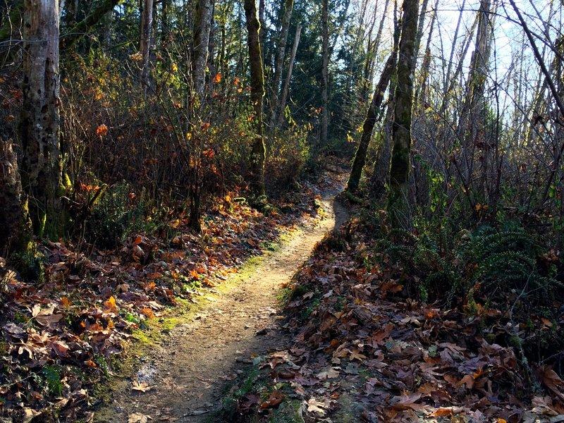 Grand Ridge in mid fall.