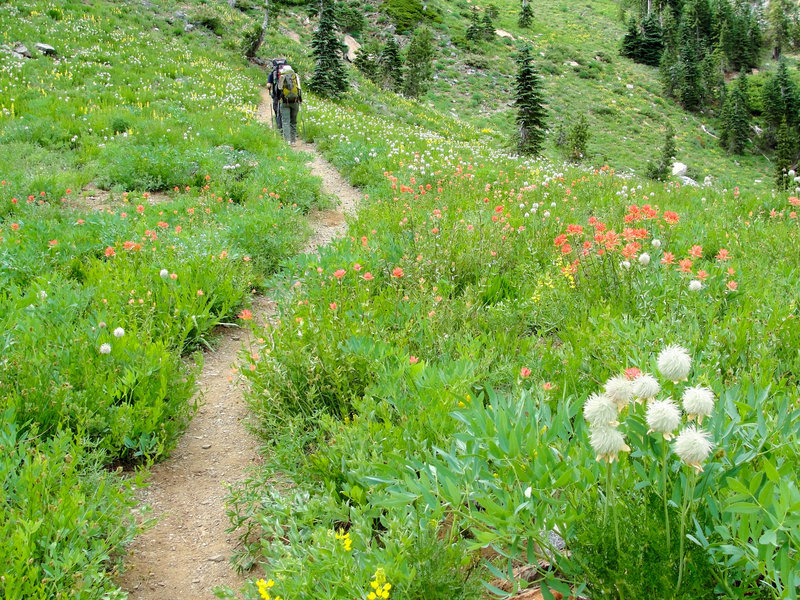 A pair of backpackers treks through flower-filled meadows in mid-August on the Long Canyon Trail.