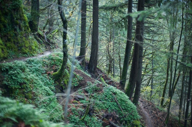 The trail switches back on itself as it makes its way up the hillside before getting to the cliff face.