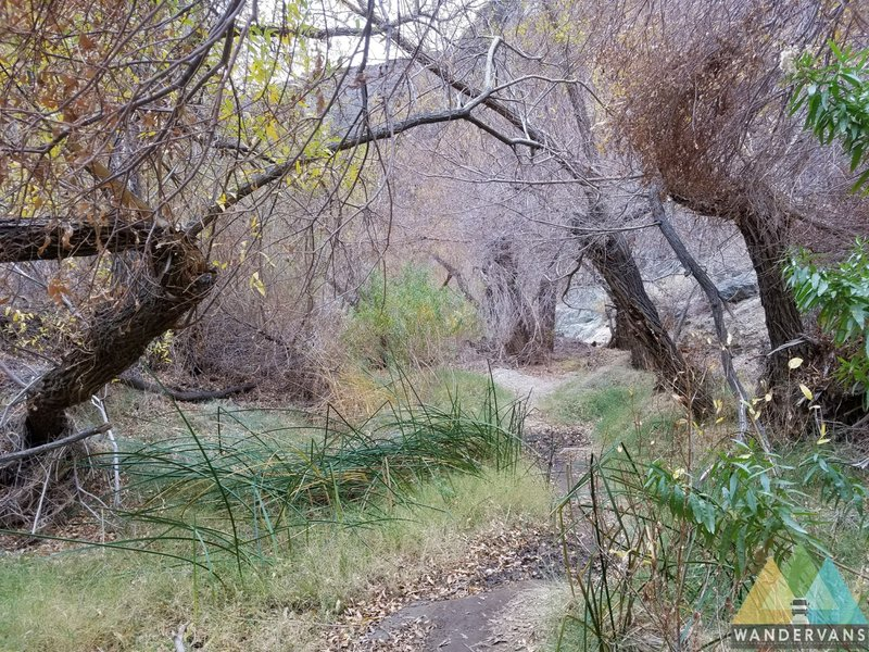 The trail to Darwin Falls follows a beautiful desert riparian ecosystem.