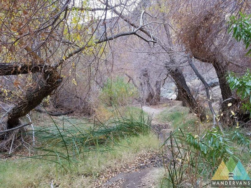 The trail to Darwin Falls follows a beautiful desert riparian ecosystem.