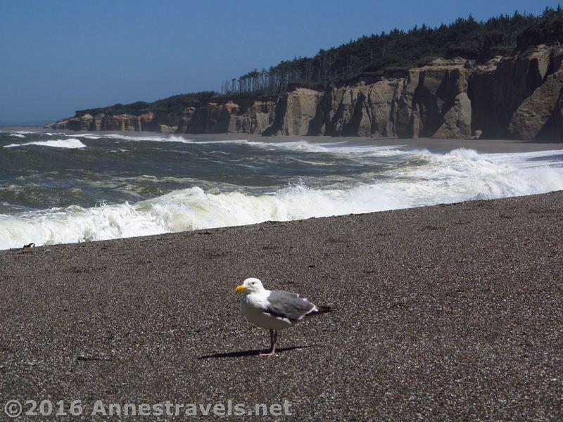 A seagull enjoys the southern end of Floras Lake Beach.