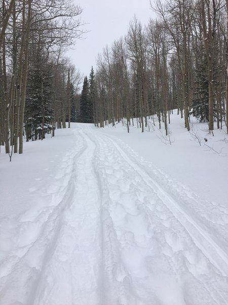 Snowshoeing in Mesa, Colorado.