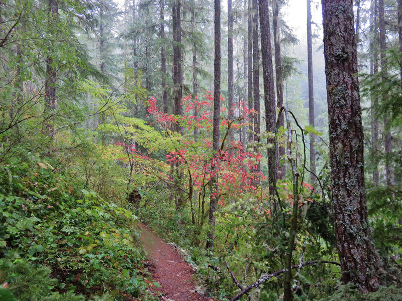 Fall is a nice time to hike Salmon River Trail. Photo by Yunkette.