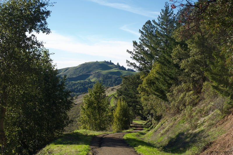 Mindego Hill can be seen throughout the hike off in the distance. The summit of the hill is your destination, despite the fact the trail descends at this point.