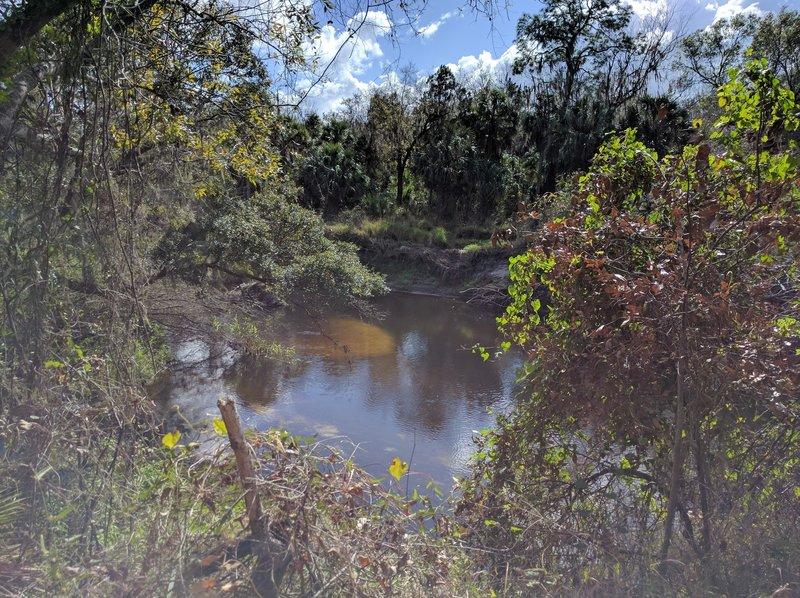 The Little Manatee River makes a gorgeous trailside companion.