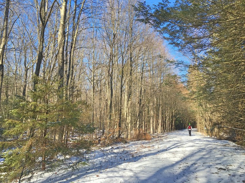 The first 2 miles of trail looks like this (in the winter).