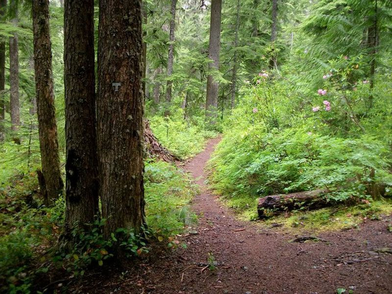 Views like this are a common sight on the south end of the Linney Creek Trail. Photo by Sean Thomas.