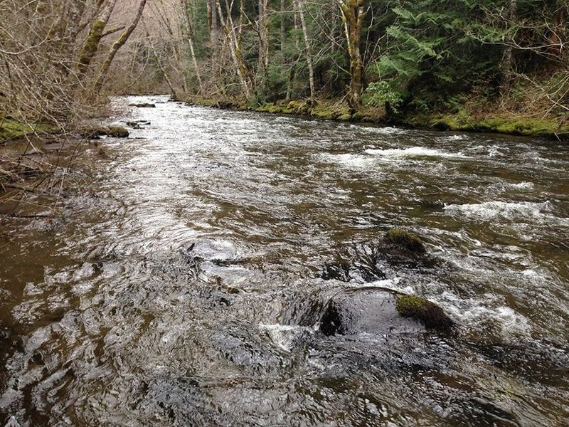 The upper section of the Salmon River Trail skirts the river occasionally. Photo by Sean Thomas.
