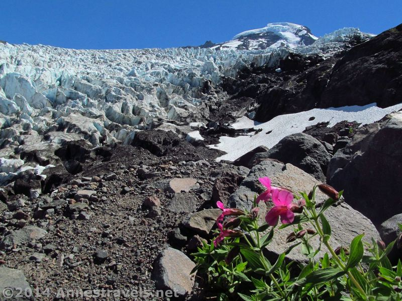 Mt. Baker's Cone and the Coleman Glacier pose for a photo taken from Heliotrope Divide.