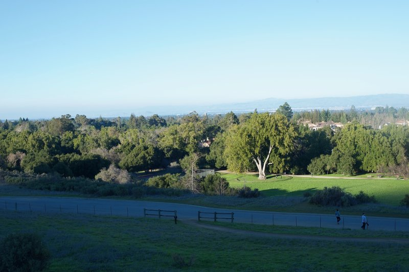 This is a view looking back toward the South Bay with the trails and the California Tree sitting inside the preserve.