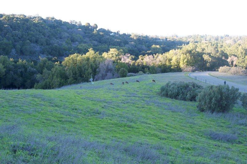 Deer feed in the fields beside the trail.