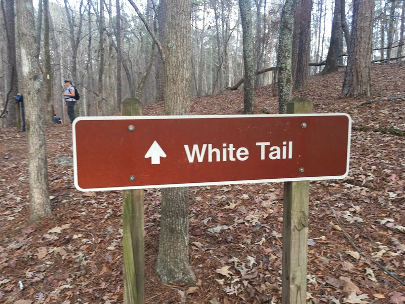 A sign makes it abundantly clear where the White Tail Trail heads.