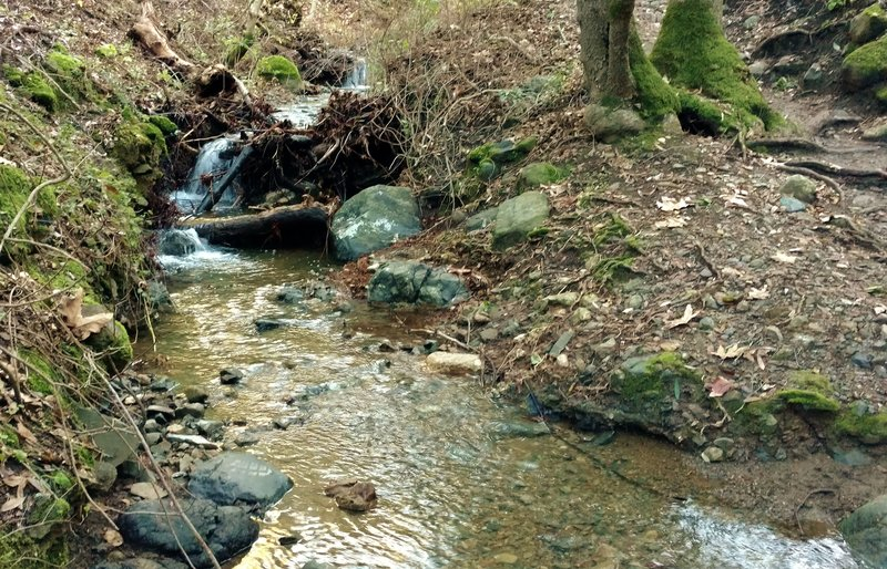 A seasonal stream flows nicely in January after some heavy winter rains.