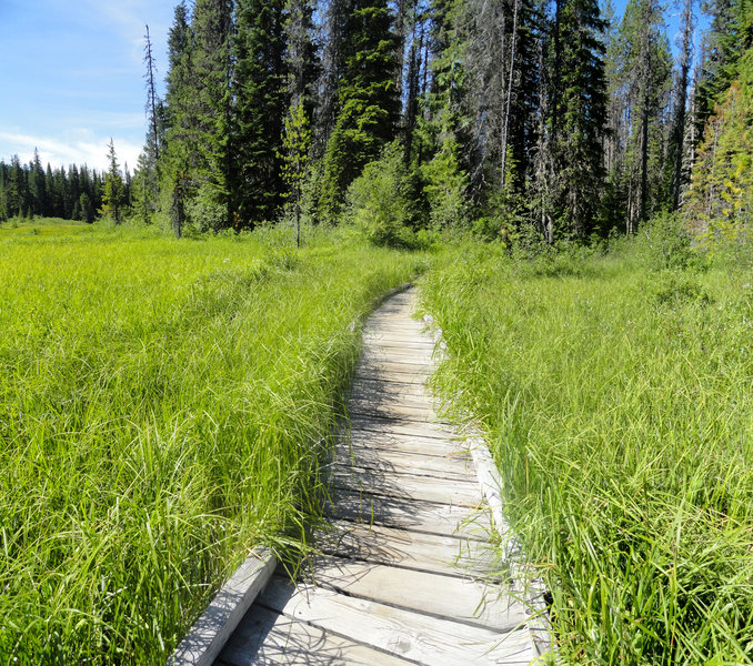 Trillium Lake Loop Trail's boardwalk is sinking in places, making it a bit challenging for wheelchairs. Hopefully it will be replaced by the Forest Service soon. Photo by USFS.