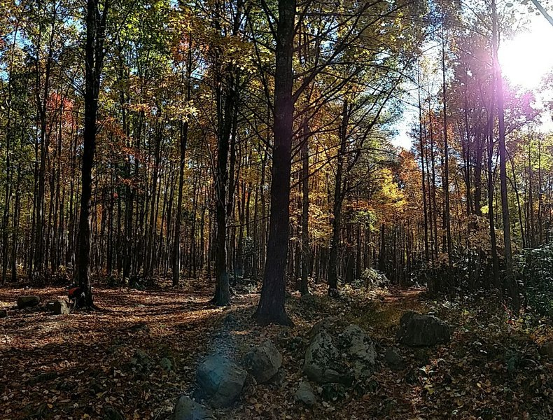 The Flint Mill Trail Trailhead is often leafy, but always gorgeous.
