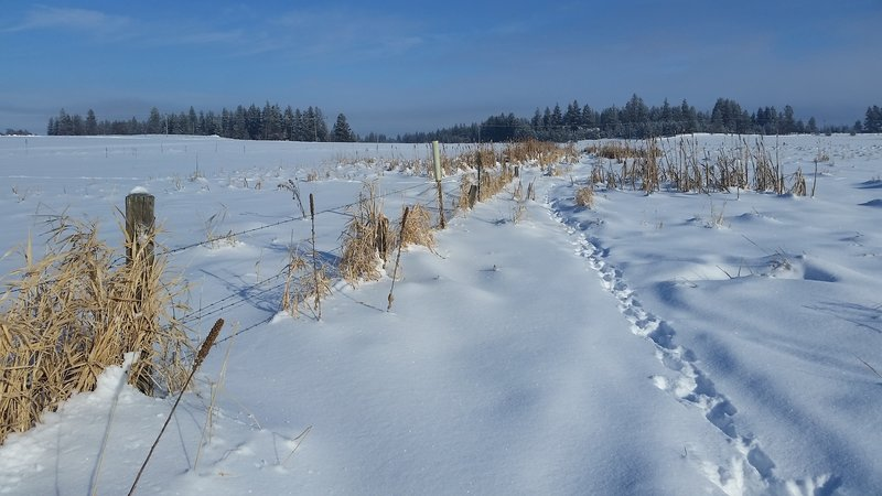 Snowshoe trails offer a great way to experience the James T. Slavin Conservation Area.