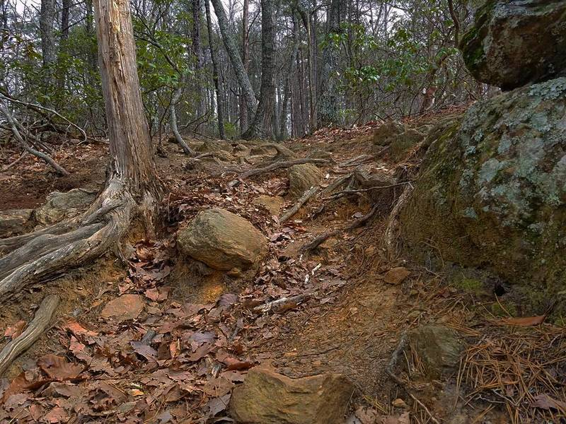 Midway up the Orange Trail, expect this leafy, rooty obstacle.