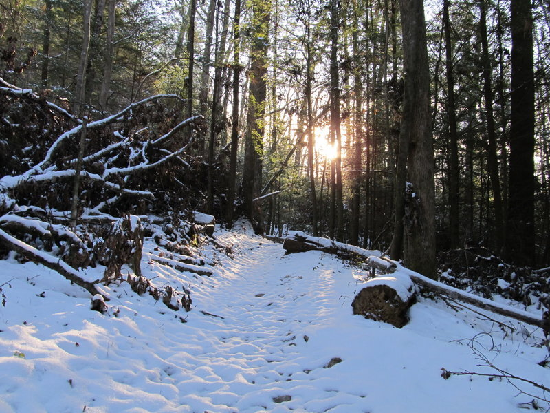 This trail sees fresh, untracked snow, if you don't count the wolves.