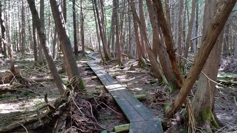 The final stretch of the trail is a 1/4 mile boardwalk through the marsh.