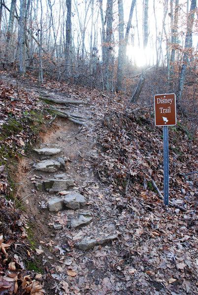 The beginning of the climb (January 2017).