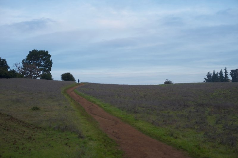 The trail ascends the hill through the meadows. Animals can be seen feeding in these fields in the morning and evenings.