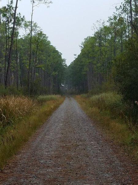 An egret flies in the distance along Boy Scout Road.