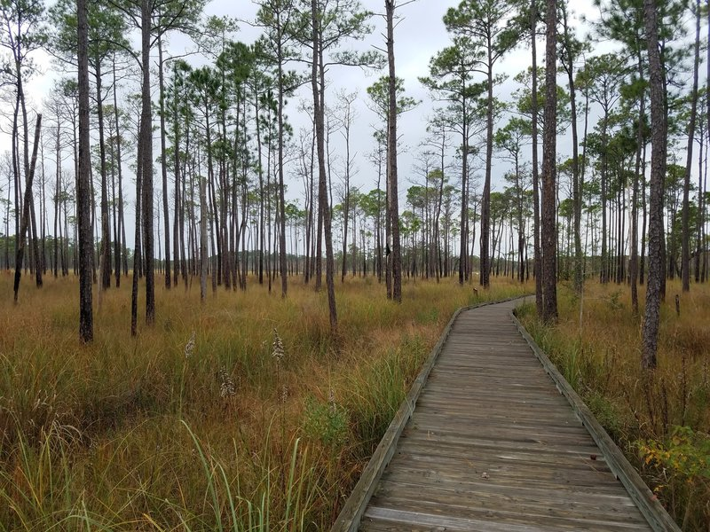 A boardwalk travels through marsh and pine along Boy Scout Road.