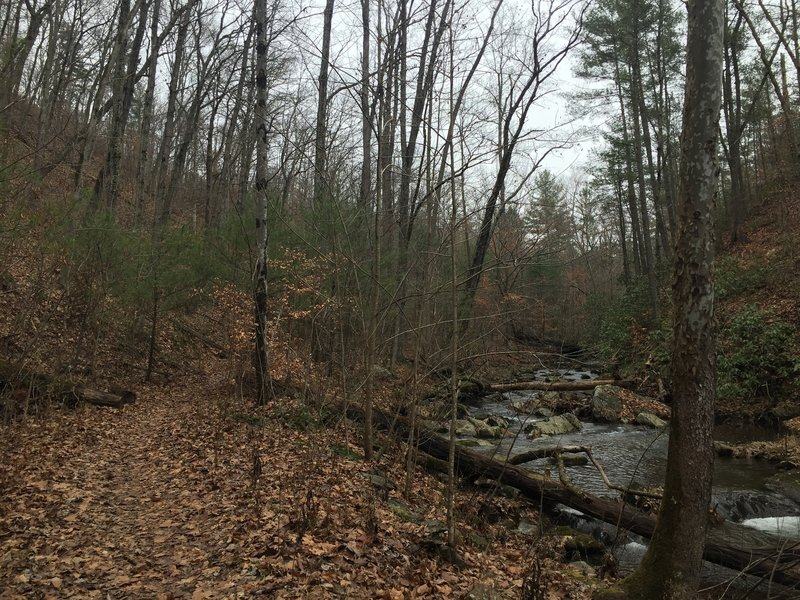 The trail can be quite leafy along Rocky Row Run Creek.