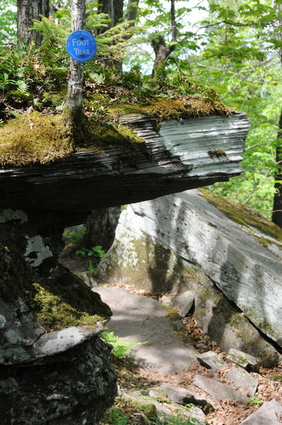 The trails are all clearly marked in the Windham Blackhead Range Wilderness.