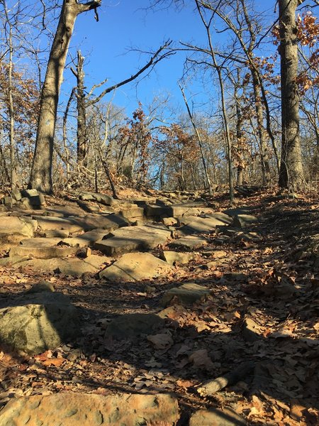 Turkey Mountain's Blue Trail has spots that are rocky underfoot.