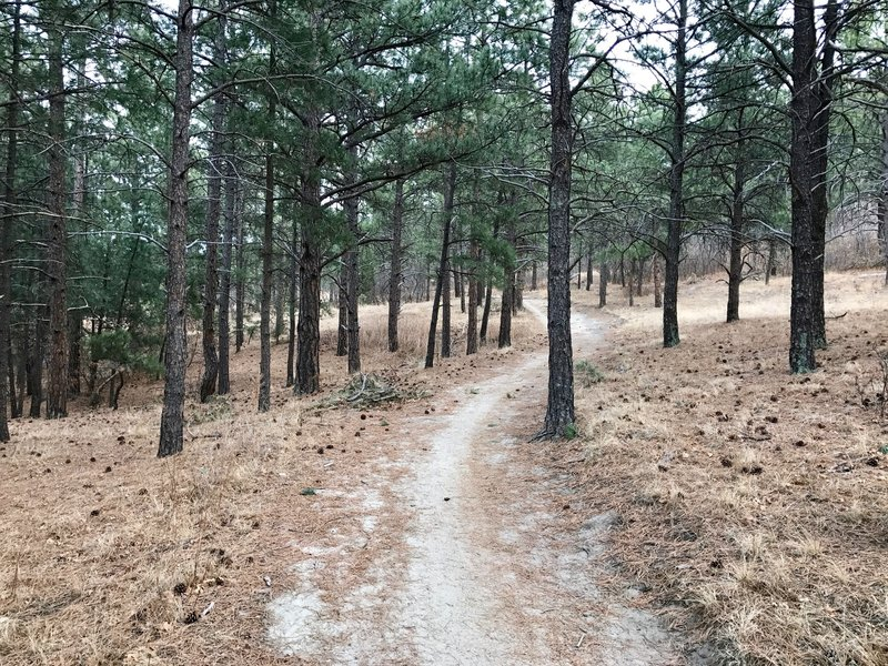 A nice wooded section of the trail.
