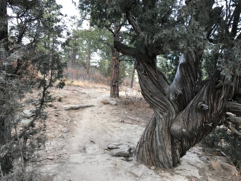 A gnarled tree with plenty of character.