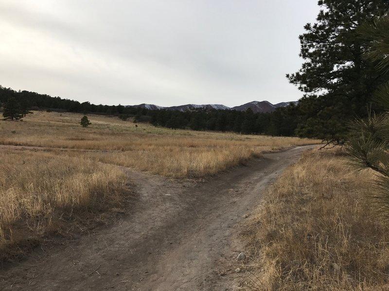 Trail through the meadow.