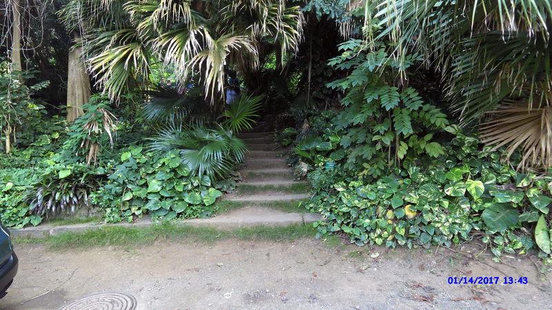 The trailhead almost hides in the dense Hawaiian vegetation.