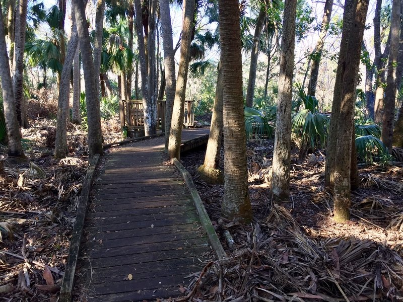 The boardwalk (about a half-mile in) leads through red maple and Virginia willow.