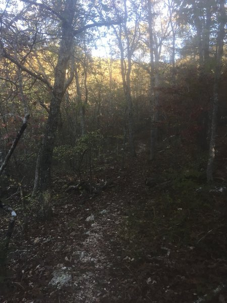 A beautiful October hike in Meramec State Park begins with leaf-covered trail in dense hardwood forests.