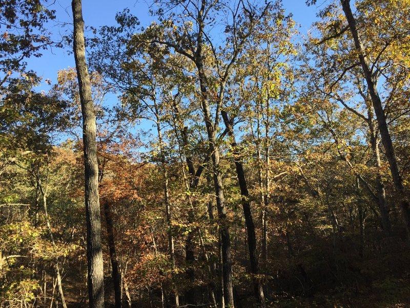 Beautiful fall foliage awaits in Meramec State Park.