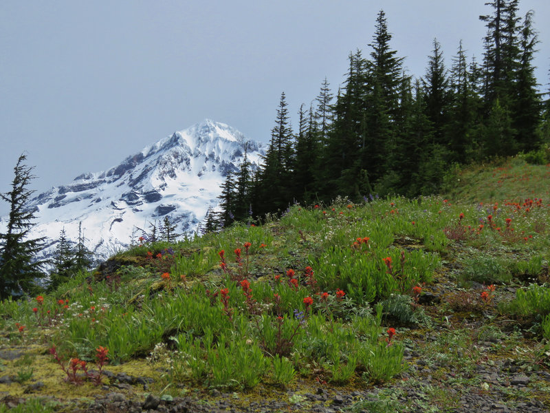 Wildflowers bloom on the Zigzag Mountain Trail #775. Blooms are best in late June and July. Photo by Yunkette.