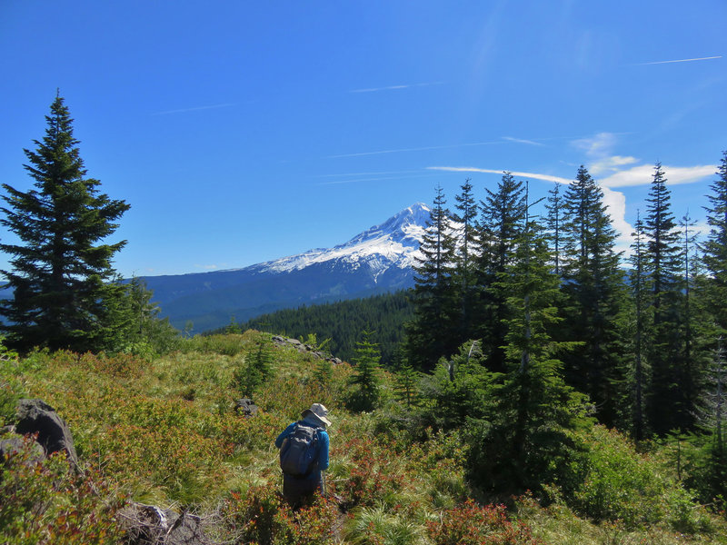 The huckleberry-picking on Zigzag Mountain Trail #775 can be phenomenal. Photo by Yunkette.