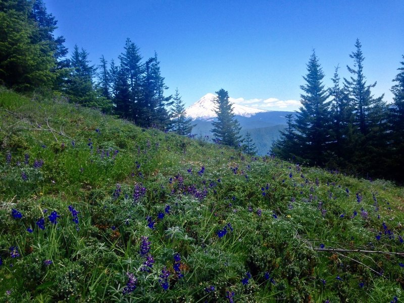 Lupine and larkspur dot the Plaza Trail. Photo by Cameron Brown.