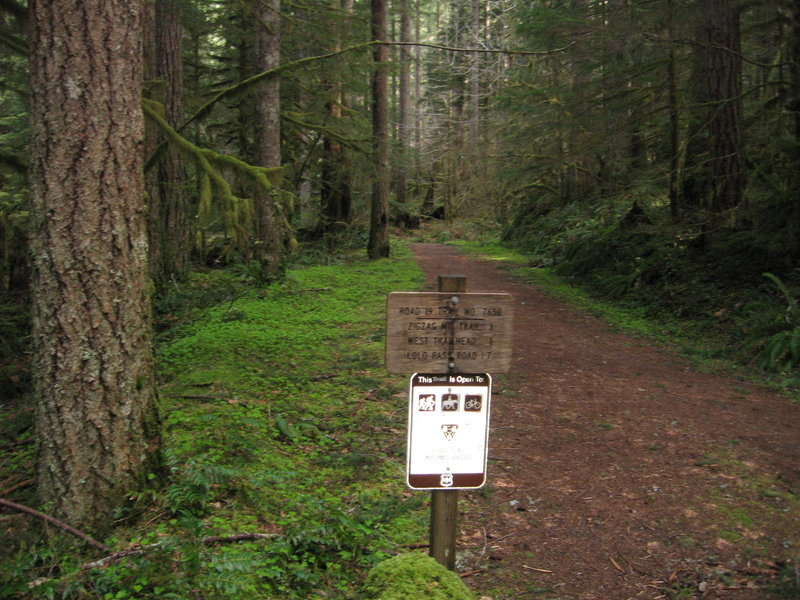 The east end of the Road 19 Trail #775B is just outside of Rhododendron. Photo by USFS.
