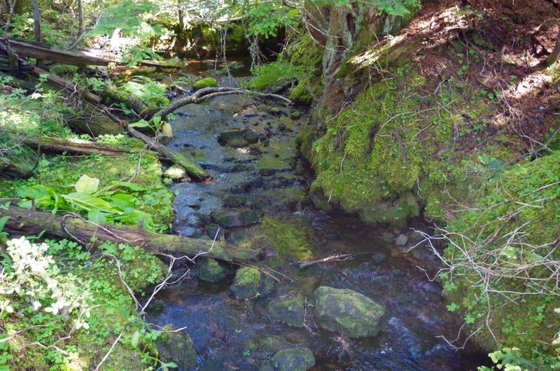 The Summit Trail crosses another tributary of Camp Creek. Skunk cabbage (large leaves on the left) is common in the wet areas. Photo by John Sparks.