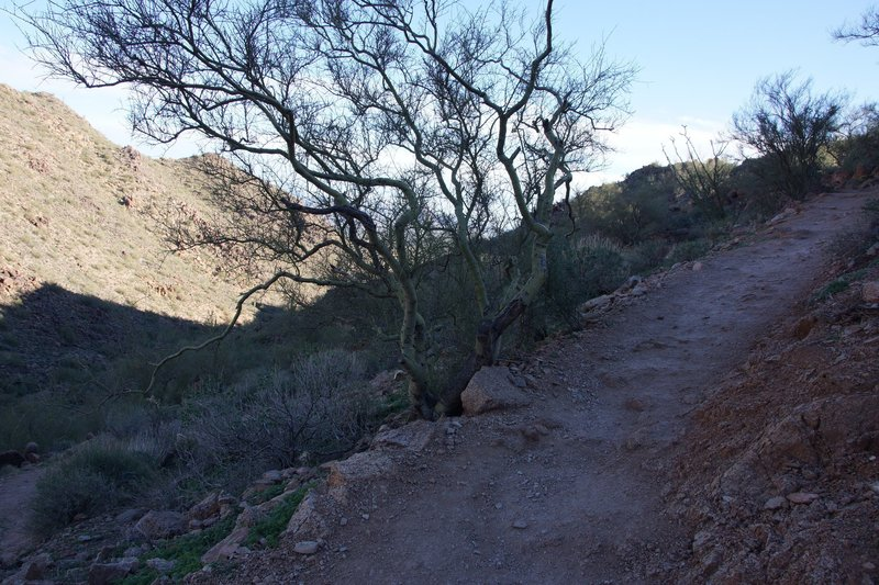 The Sunrise Trail begins its steady climb right from the trailhead.