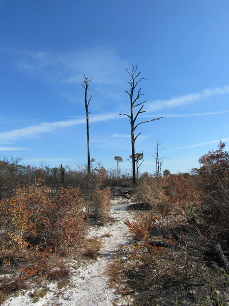A controlled burn passed through this area along the trail.
