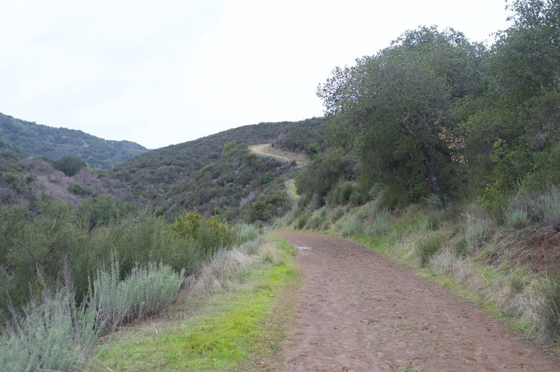 The trail climbs higher into the preserve. While the majority of the trail isn't steep, the trail climbs for almost 2 miles before leveling out.