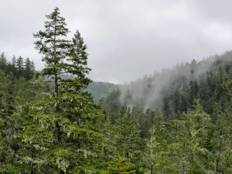 Fog drifts through the mountains on a rainy day in Big Basin Redwoods State Park.