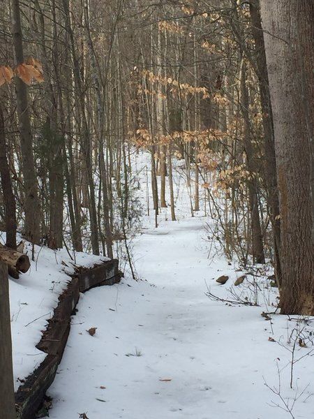 A light blanket of snow covers the Chickadee Trail in January.