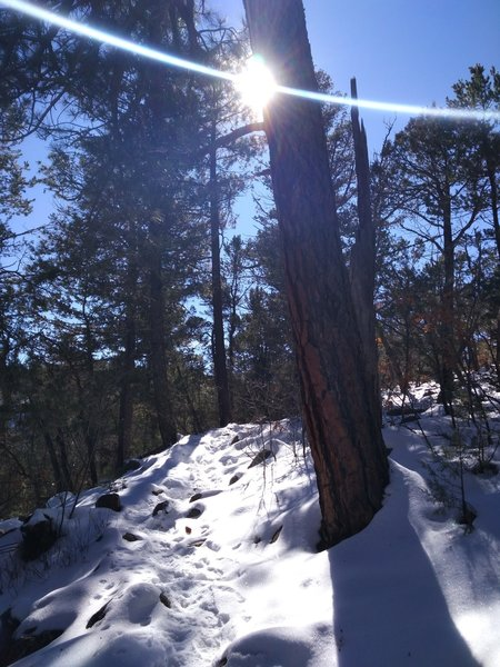 The South Sandia Crest Trail continues its steady grade through this spot about 4 miles in.