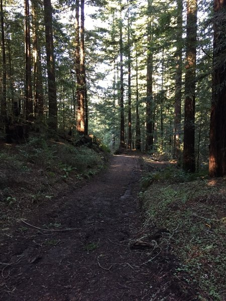 The Grabtown Gulch Trail is well manicured in this spot.
